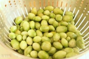 greentotamotes