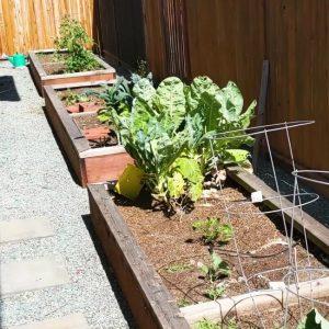 gardening raised bed
