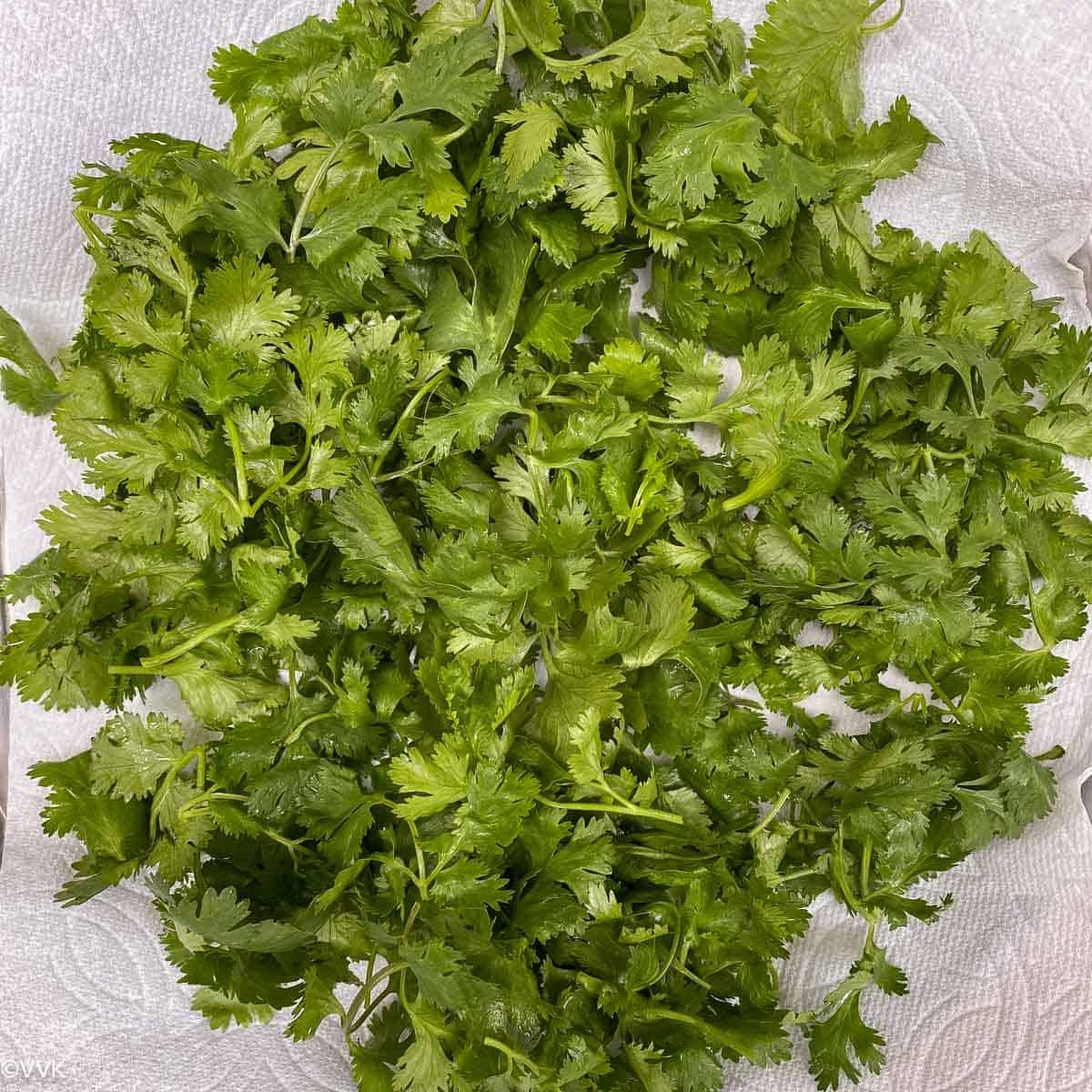 washed cilantro
